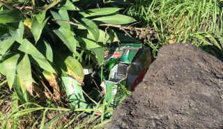 An empty box of alcohol amongst one of the foreshore banks. Photo: Hele Ikimotu