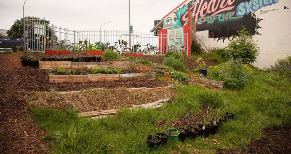 Growing hope for struggling community garden